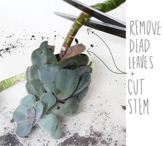 It's Succulent Time Again — Deuce Cities Henhouse