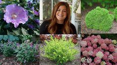 Garden Shrubs, Lawn And Garden, Garden Plants, Garden Landscaping, Small Shrubs, Types Of Shrubs, Deck Fire Pit, Butterfly Bush, Gardening