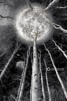 Full Moon + Winter + Barren Trees + Black and White + Photography~~Holding the Moon by Lars van de Goor~~ Moon Beauty, Shoot The Moon, Pics Of The Moon, Moon Magic, Lunar Magic, Super Moon, Foto Art, Jolie Photo, Stars And Moon