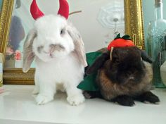 The Daily Bunny's Halloween 2013 mega-post! - October 31, 2013 - More at today's link: http://dailybunny.org/2013/10/31/the-daily-bunnys-halloween-2013-mega-post/ !
