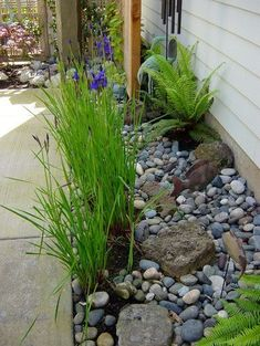 side yard: river rock used as mulch with limited but interesting plants.