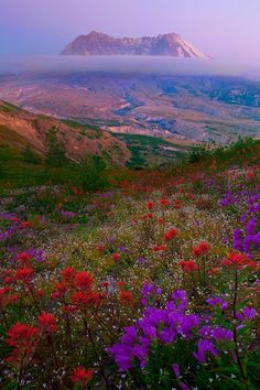 Mount St Helens (with gorgeous wildflowers) in Washington State. It is 50 miles NE of Portland and/or 96 miles South of Seattle. Lovely.