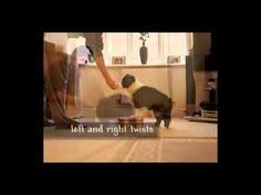 ▶ Border Collie Training : How to Train a Border Collie - YouTube