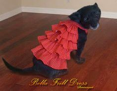 doggie dress tutorial. This one for Rosie who really does like wearing things to keep her warm
