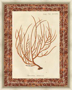 Gorgonia Miniacea Marble Framed Painting Print