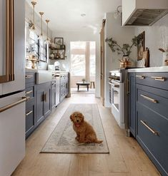 galley kitchen ideas: Semihandmade Supermatte Night Sky Shaker drawers and doors