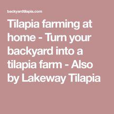 Tilapia farming at home - Turn your backyard into a tilapia farm - Also by Lakeway Tilapia