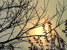 Sweetbriar Dreams: Wordless Wednesday - The Sahara Sun... in England!...