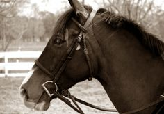 it takes me back to the last winter. i brought home my horse and she was looking like this horse...:)