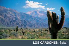 Los Cardones, provincia de  Salta, al noroeste argentino .