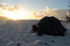 Cousin Island Reserve / webside