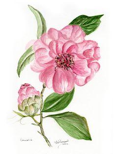 Mijn passie | marie therese van de put - fassaert, botanisch, tekenen, aquarelleren, boeketten, botanische kunst