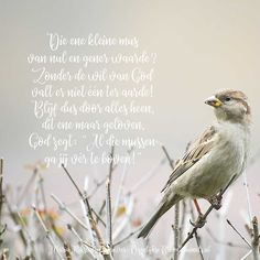 Faith Quotes, Bible Quotes, Afrikaanse Quotes, Morning Greetings Quotes, Happy Animals, My Lord, Bible Art, Sparrows, Robin