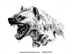 hyena illustration - Google Search