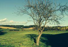 aufnahme (mitten im suedburgenland) Austria, Vineyard, Country Roads, Outdoor, Apple Tree, Landscape, Architecture, Nature, Outdoors