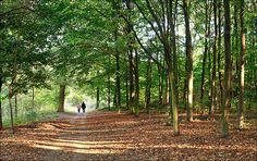 France, Paris, bois de Vincennes (Vincennes forest)