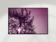 Items similar to Printable Forest Photography, Larch Tree Tops on Etsy Larch Tree, Forest Photography, International Paper Sizes, Tree Tops, Tree Print, Office Art, Poster Size Prints, Printing Services, Printable Wall Art