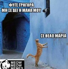 Σε θέλω Arabic Jokes, Arabic Funny, Funny Greek Quotes, A Comics, Animal Memes, Funny Photos, My Best Friend, I Laughed, Haha