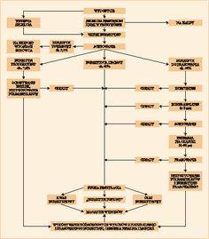 Jubiler, jubilerski, jubilerstwo, srebro, złoto, bursztyn, platyna, biżuteria, brylant, bursztyn, klejnoty - Serwis WWW Polskiego Jubilera - profesjonalne informacje branżowe, nowości, ciekawostki, opinie ...