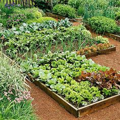 Learn exactly how to plan your first vegetable garden with this step by step guide! Discover what tools you need, how to plan your vegetable garden layout, determining the perfect spot for your garden and which vegetables grow best depending on the season Small Vegetable Gardens, Vegetable Garden Planning, Vegetable Garden For Beginners, Vegetable Garden Design, Gardening For Beginners, Vegetable Gardening, Gardening Tips, Kitchen Gardening, Veggie Gardens