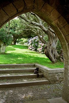 St Michael's Mount Gardens, Cornwall, England  | View of gorgeous gnarled tree through arch near garden entrance
