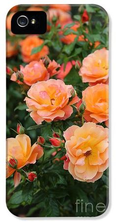 """""""Orange Roses"""" by Carol Groenen is now available as iPhone cases.  #iPhonecases #iPhonecase #orangeroses #orange #iPhone4 #iPhone5"""