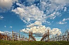 Le mie colline by EOS60  Canon EF-s 15-85 arturo arturo Paiano canon EOS60D cielo colline conegliano italia nuvole paesaggi p