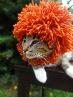 Crochet Hats for Cats. This is hilarious! I think every cat should have one of these!