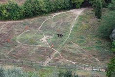 A Solitary Horse - A solitary horse in a manure - Montisi (San Giovanni d'Asso), Tuscany, Italy. Tuscany Italy, San, Horses, Explore, Animals, Animales, Animaux, Animal, Animais