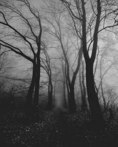 Foggy woods that are perfectly spooky