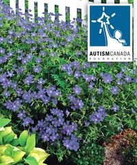 Autism Canada Perennial Blue Hardy Geranium This Is The True Not To Be