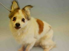 BEVERLY – A1100279