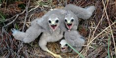 The indiscriminate traps crush the bird's legs and leave them in agony for hours.  (104728 signatures on petition)