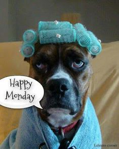 I'm so happy it's Monday! You be happy too! Good Morning Good Night, Good Morning Quotes, Image Facebook, Monday Morning Humor, Good Monday Morning, Friday Humor, Funny Quotes, Funny Memes, Funny Monday Memes