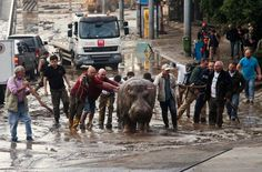 Zoo Animals on the Loose in Tbilisi After Flooding - NYTimes.com