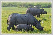 Kaziranga Rhino Safari With Sundarban