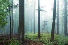 zeitgemäße Jagdausrüstung bei revierbedarf.at.     Ihr Online-Shop aus Österreich Trunks, Plants, Hunting Accessories, World, Drift Wood, Tree Trunks, Plant, Planets