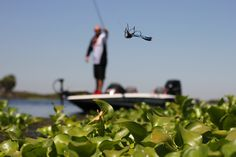 Many new techniques and tackle have been introduced to the bass fishing world in the last two decades. One of the most popular techniques introduced on the California Delta is punching through thick matted vegetation. To punch, an angler needs a Texas rig with a tungsten bullet weight from 3/4 to 2 ounces in weight ...