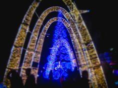 Winterland or Dreamland? Holiday Tree, Holiday Lights, Christmas Holidays, Instagram Website, Trees, Gardens, Events, Facebook, Twitter