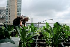At the end of East 29th Street in Manhattan, between First Avenue and the East River, are thousands of milk crates filled with herbs and vegetables...