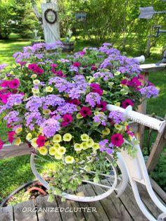 Bike basket annuals are Large Lilac Blue Verbena, Superbells Yellow Chiffon Calibrachoa, Supertunia Mini Purple and Ornamental Oregano. Colorful Combination!