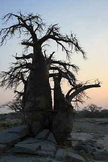 Kubu or Lekhubu Island, Botswana, 2008