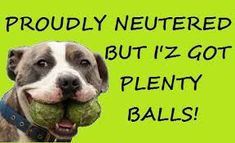 Image result for pit bull awareness month