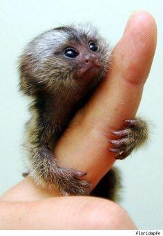 Sweet little marmoset!