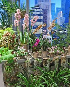 Orchids are arranged in a colorful grouping of small pots and ornamental wall hangings.
