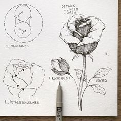 Among the he many varieties of roses, two of them were chosen: a classic Rose with its rosebud 🌹 and my favourite species of… Flower Drawing Tutorials, Flower Sketches, Art Tutorials, Cool Art Drawings, Art Drawings Sketches, Easy Drawings, Botanical Drawings, Botanical Art, Floral Drawing