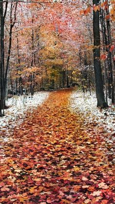 ✯ Fall Snow - imagine what the air would smell like!