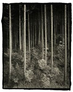 Trees in a dark forest. Yuuzen Nobuyuki Kobayashi's work is inspired in part by the Shinto belief that everything in nature contains a god. 'There are moments that I feel perhaps there is a god here, especially when I am looking at nature,' he says. 'I feel as if I am taking portraits of gods'