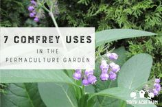 7 Comfrey Uses in the Permaculture Garden: Comfrey fertilizer is considered a powerhouse in the permaculture garden. Here are seven comfrey uses for building healthy soil and growing healthy crops. Permaculture Design, Permaculture Garden, Organic Soil, Organic Gardening, Gardening Tips, Freshwater Plants, Herb Farm, Compost Tea, Soil Improvement