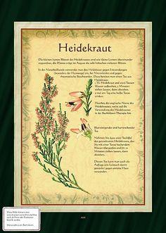 Heidekraut